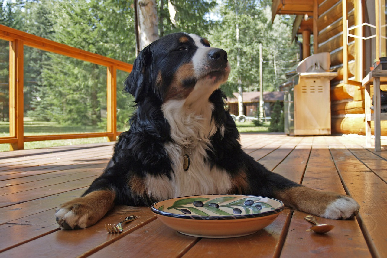 Pet-Friendly Restaurants Around the River Towns