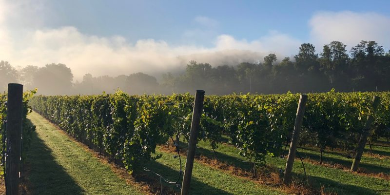 Springtime, and the Sipping is Easy at Federal Twist Vineyard